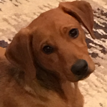 CONTEST:  Name My Puppy/Office Mascot